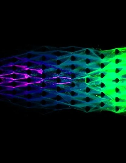 dash biomateriau vie