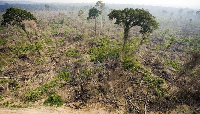deforestation foret amazonienne