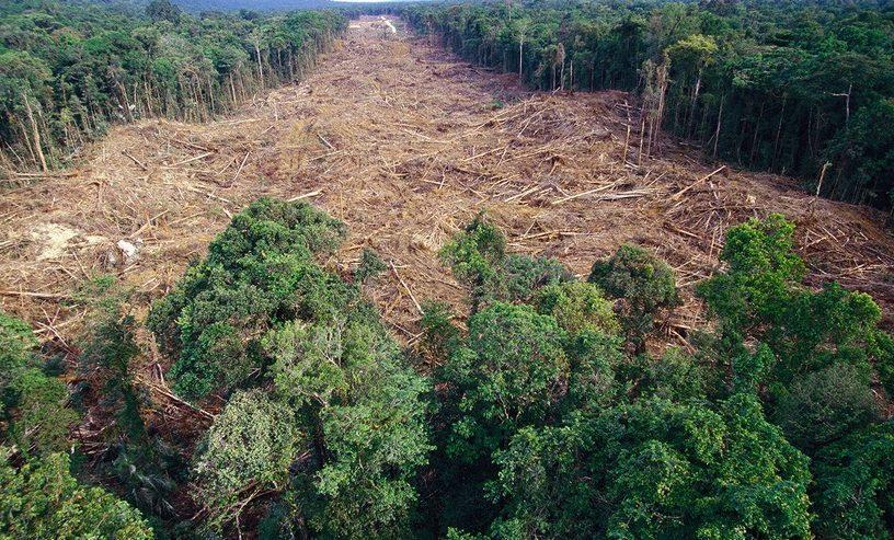 deforestation foret arbres
