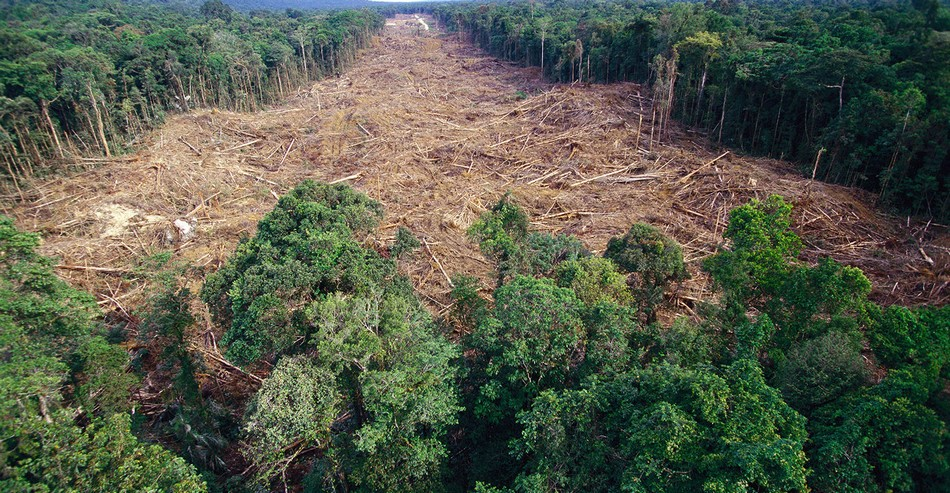 deforestation foret arbres