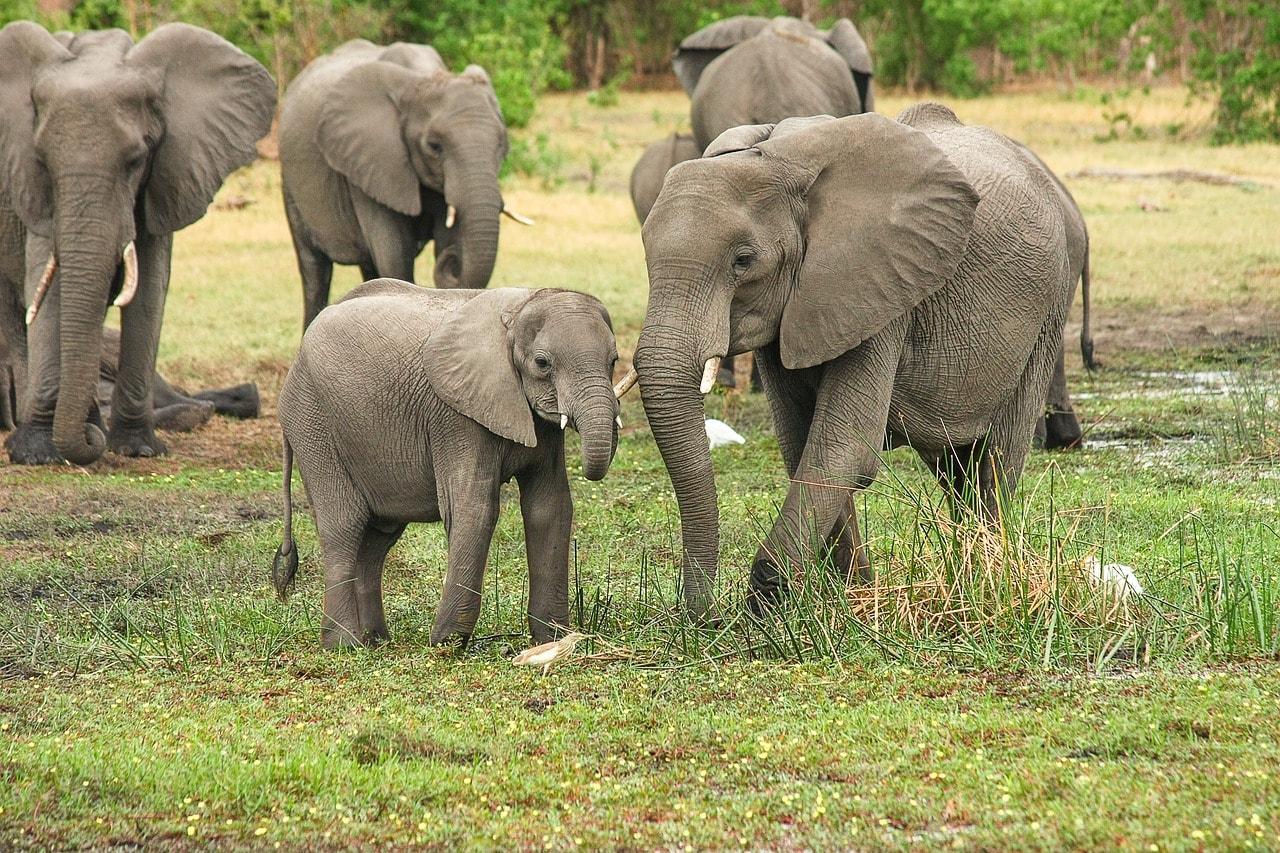 elephant afrique sud braconnage