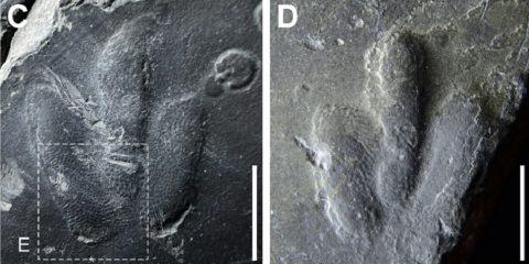 empreintes peau dinosaure