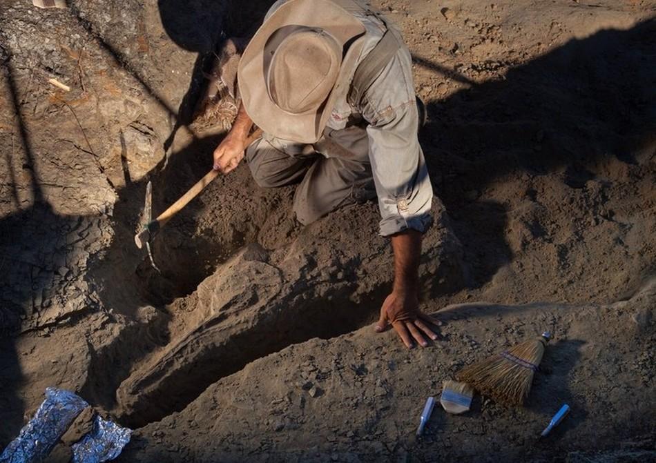 dinosaure extinction masse fossile poisson decouverte