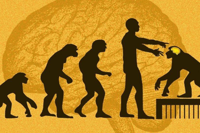 genes humain singes