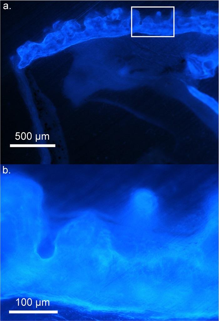 nature grenouille minuscule brillante os