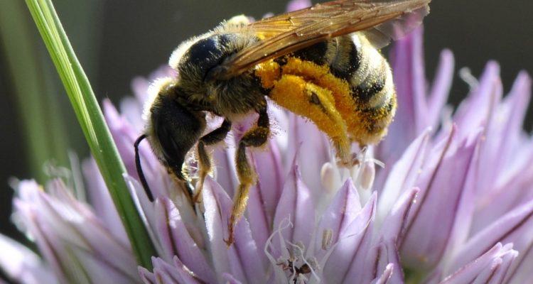 Un médecin retire quatre abeilles vivantes de l'œil d'une femme