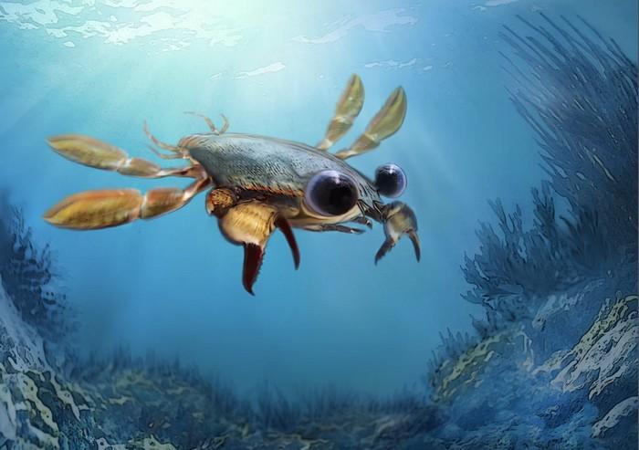crabe yeux globuleux