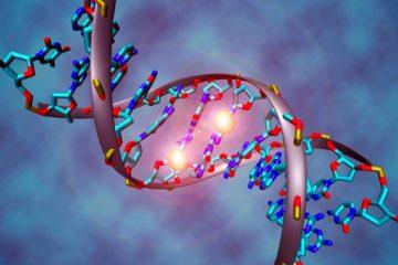 pauvrete epigenetique