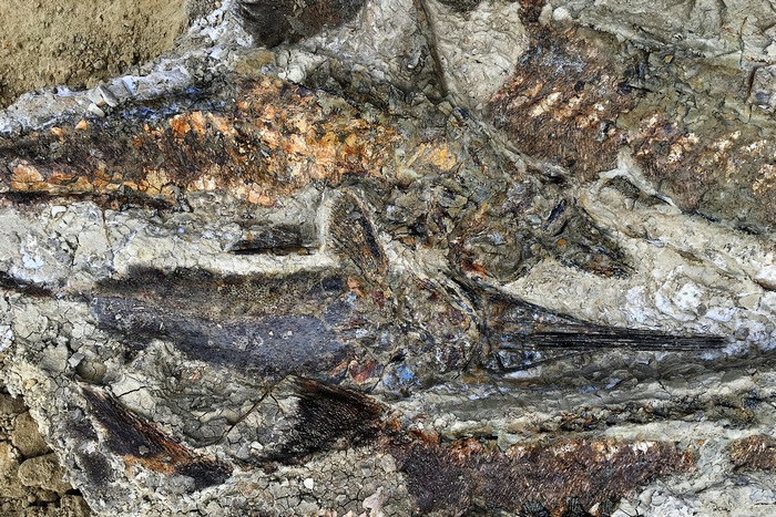asteroide cratere dinosaures extinction masse poisson fossile