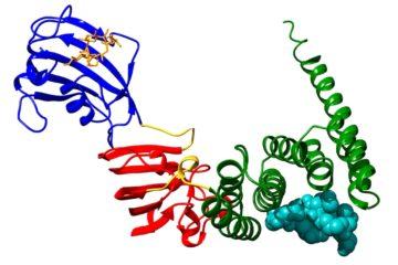 proteine FKBP51