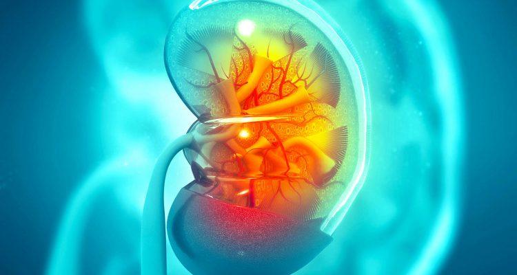 rein traitement revolutionnaire insuffisance renale