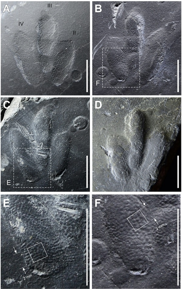 releves empreintes peau dinosaure
