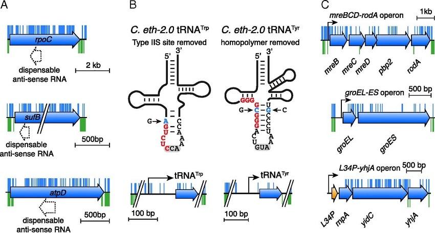 sequences genetiques bacterie