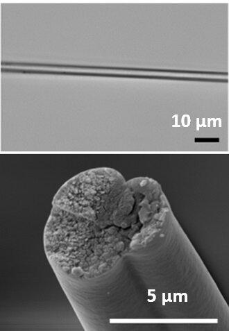 soie araignee bacterie editee