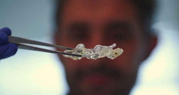 souris transparente tissus organiques transparence