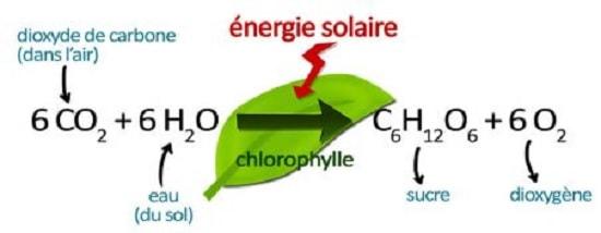 bilan photosynthese