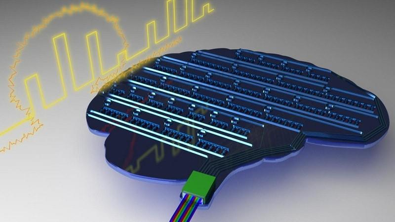 circuit neurones synapses