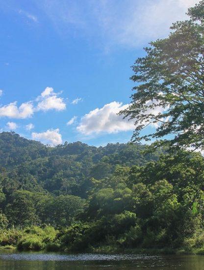 deforestation philippines