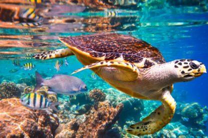 rapport onu biodiversite rechauffement changement climatique homme cause