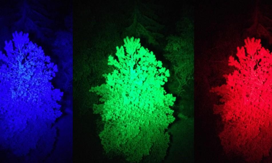 lumiere disco foret arbres