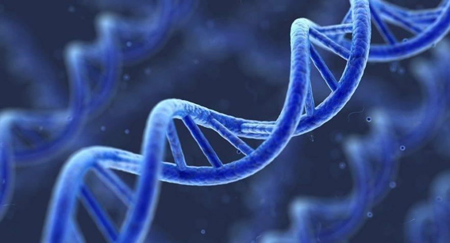 mutation genetique lupus
