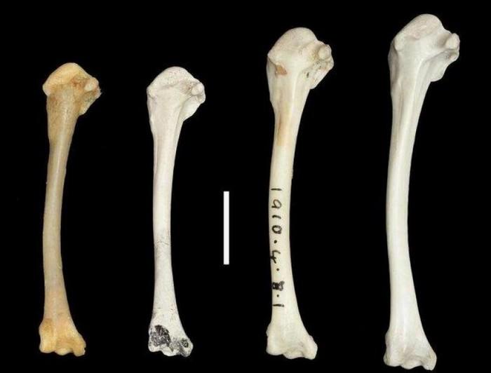 ossement fossiles oiseaux