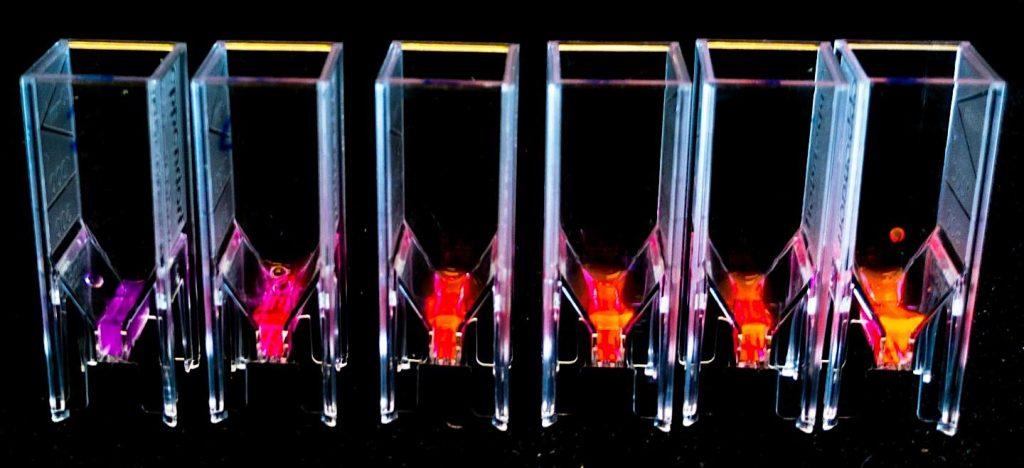 proteines fluorescentes