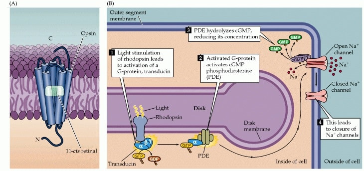 schema transduction visuelle