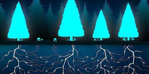 wood wide web reseau microbes connexion mondiale arbres