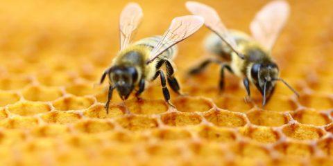 abeilles symboles nombres