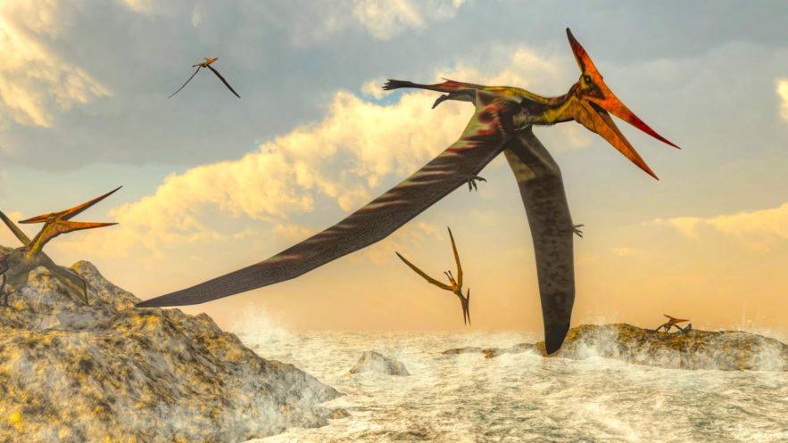 bebe pterodactyle voler