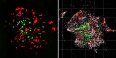 cellules arn adn