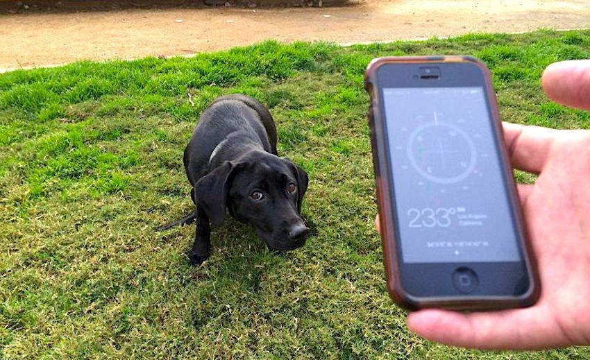 chiens detectent champ magnetique terrestre alignement defequation
