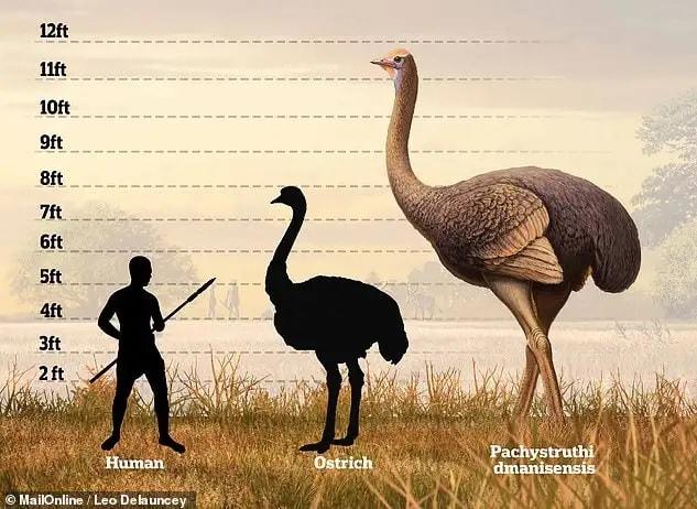 Un oiseau géant de 3.7 mètres de haut a vécu en Europe aux côtés de l'Homme, durant le Pléistocène ! By Thomas Boisson Comparaison-taille-oiseau