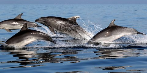 dauphins amitie selon interets communs