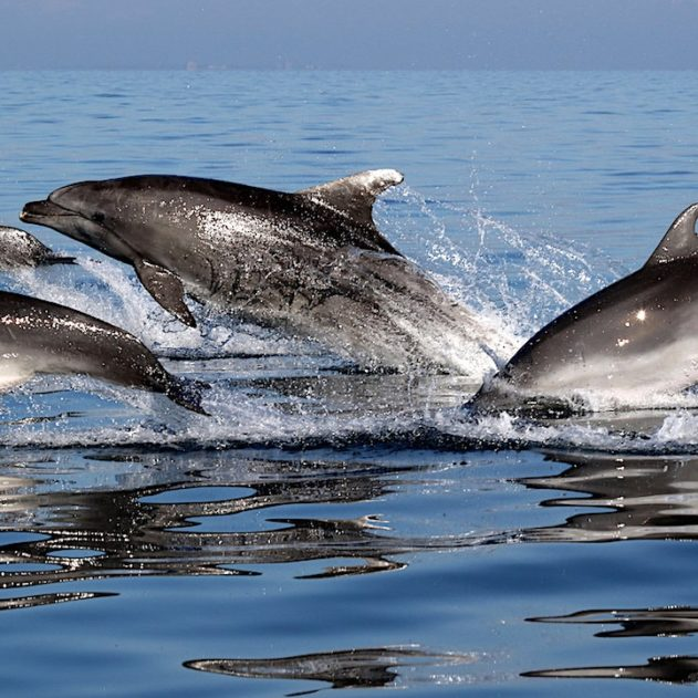 dauphins amitie selon interets communs