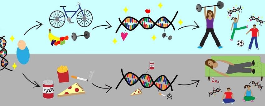 epigenetique schema