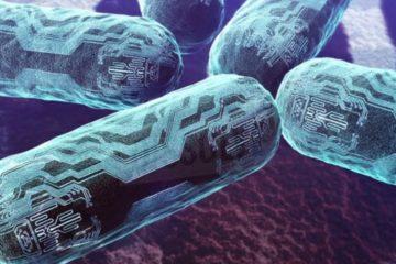 nano organisme co2