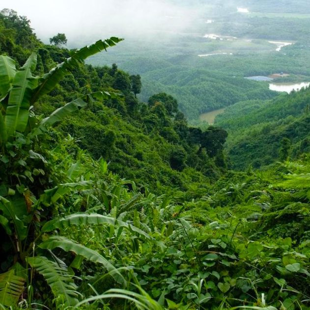 plante extinction rapide