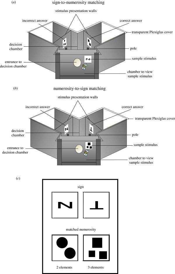 schema protocol experience
