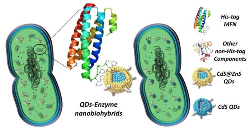 structure nano organisme