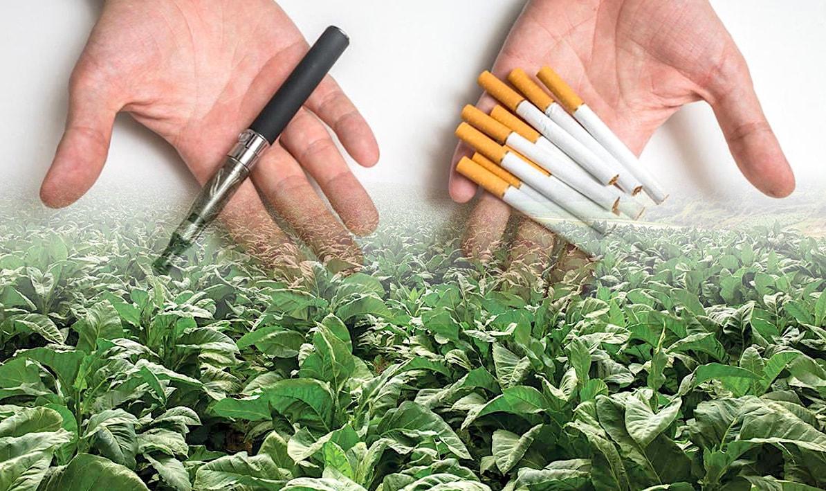 tabac genetiquement modifie solution lutte contre tabagisme