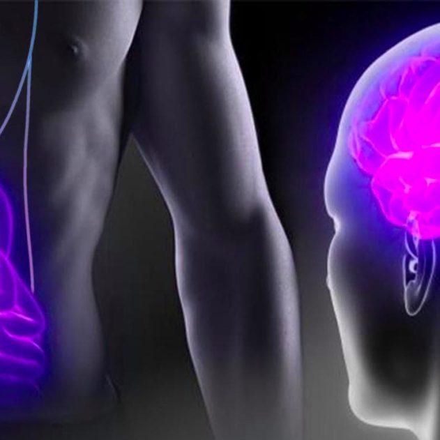 cerveau intestin parkinson