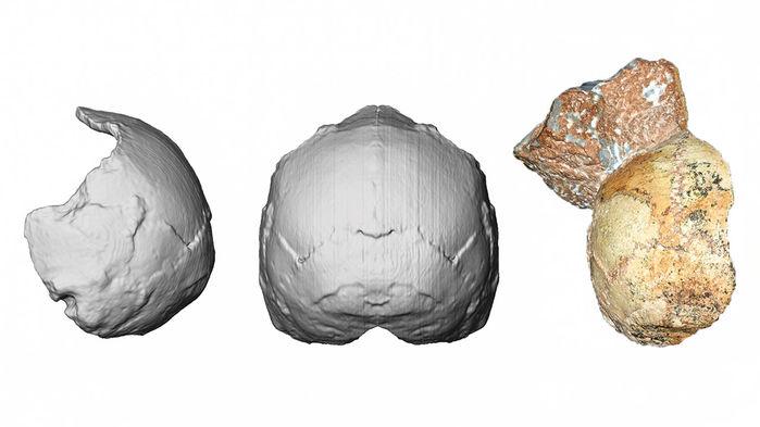 fragment crane hominine 200000 ans grotte grecque