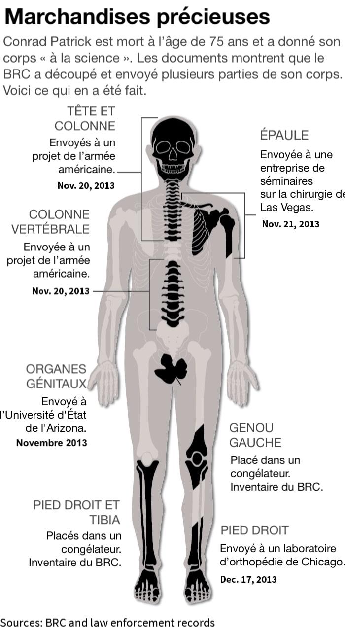 marche membres corps humains enquete brc graphique