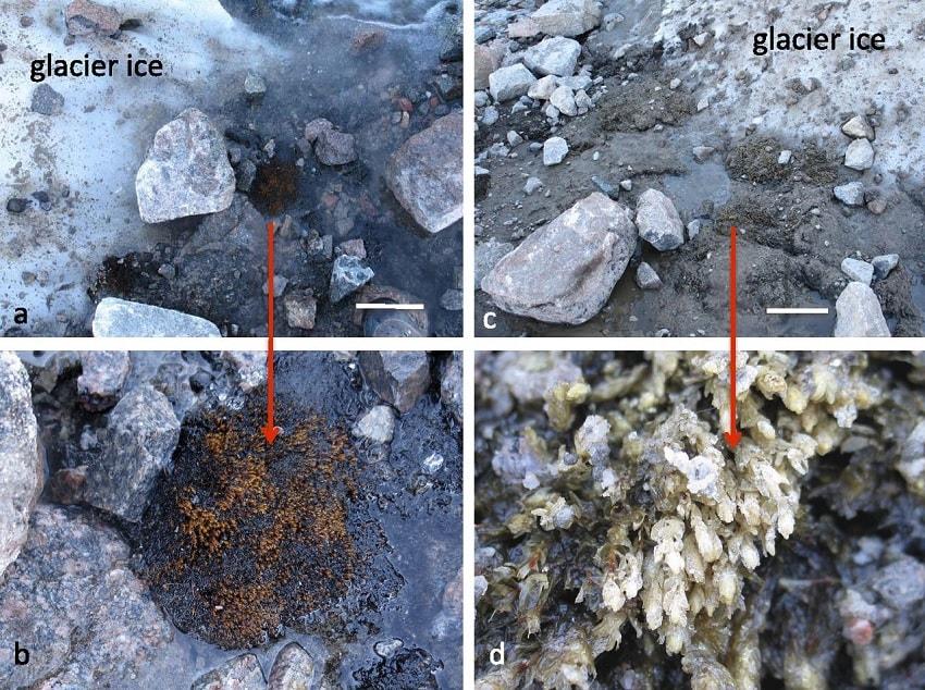 mousse glacier