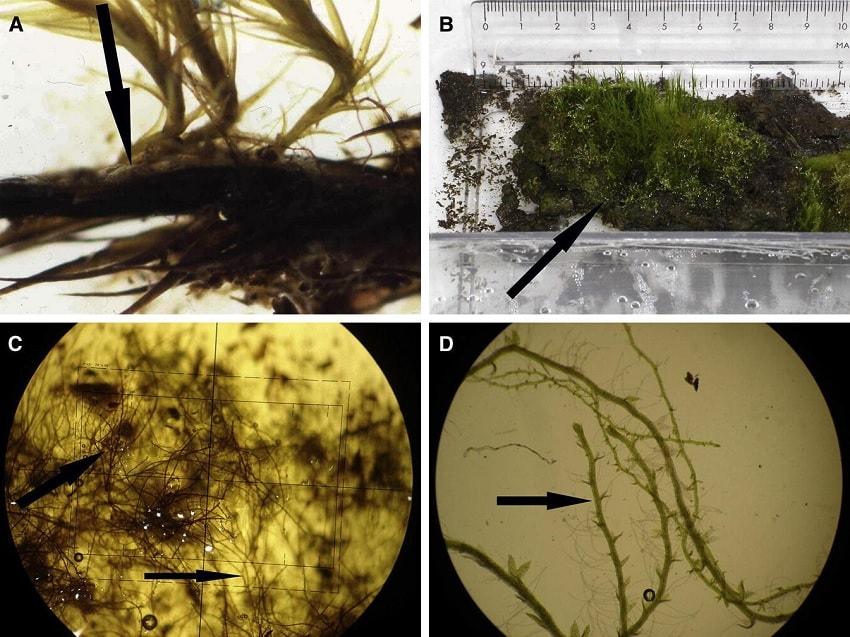 mousse in vitro