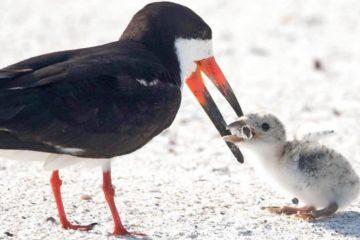oiseau bebe cigarette megot