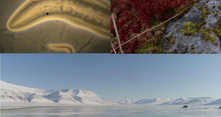 organismes pergelisol