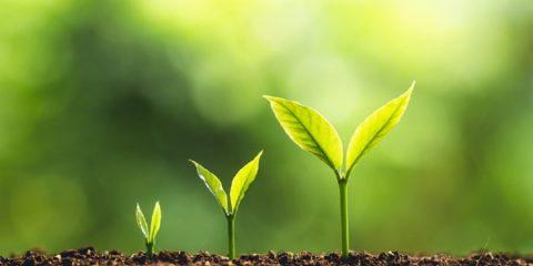 plantes conscience